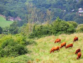 Groene valleien van haute Normandie