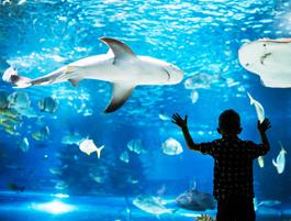 Centre Aquatique du Pays Blanc