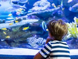 Centre Aquatique du Pays de Falaise